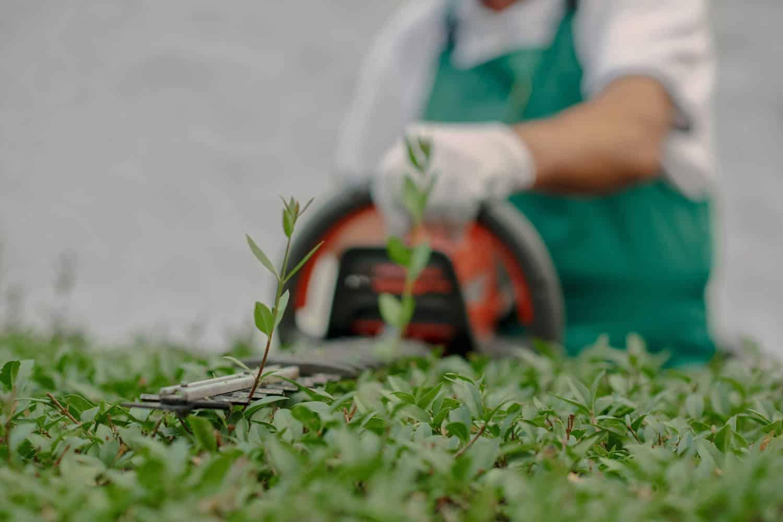 Anlægsgartner trimmer en busk