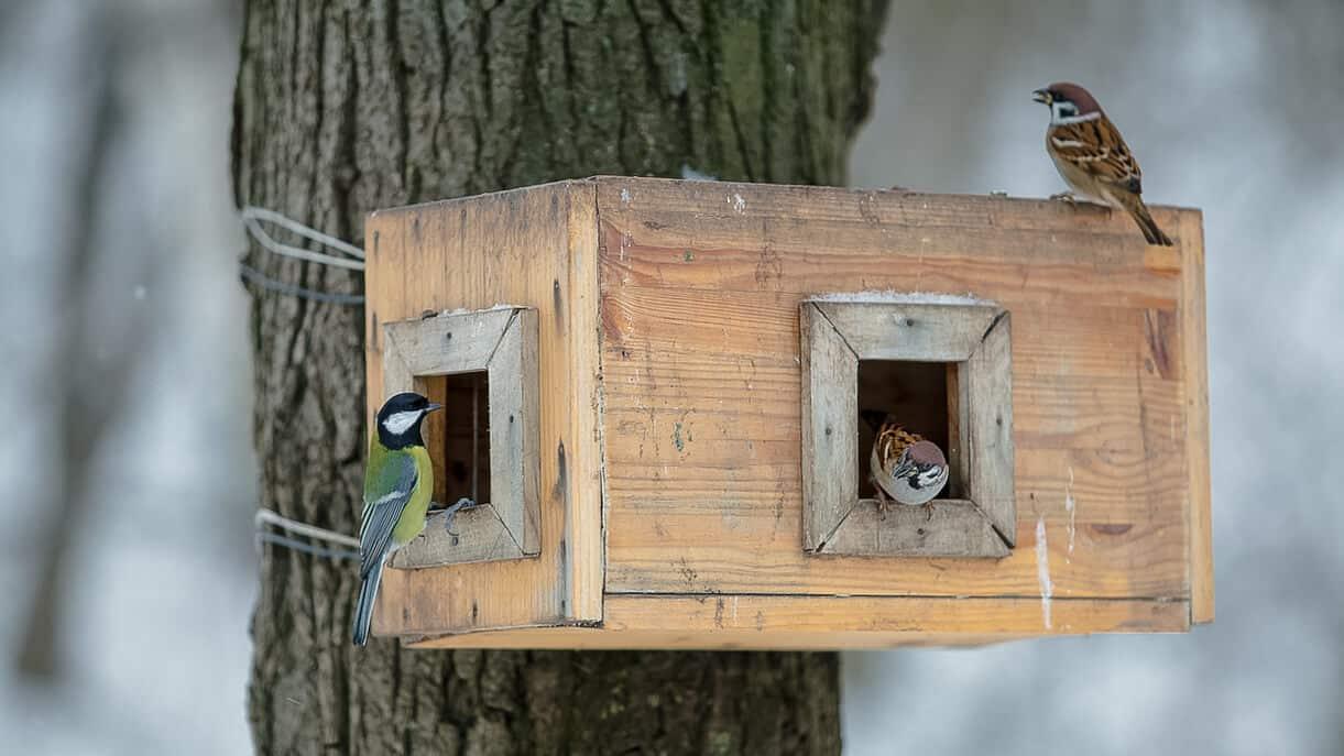 Fugle i haven spiser fra fodrebræt
